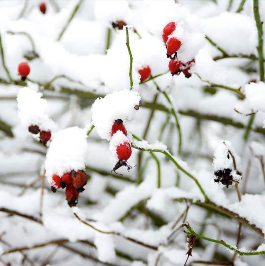 flux-biohotel-werratal-klemm-design-anna-wintermood